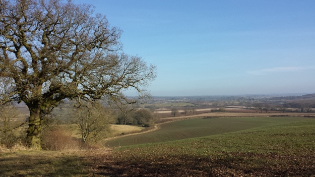 View from Bannams Wood